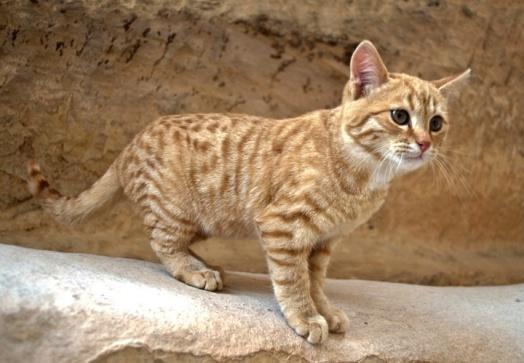 cats-of-petra-6