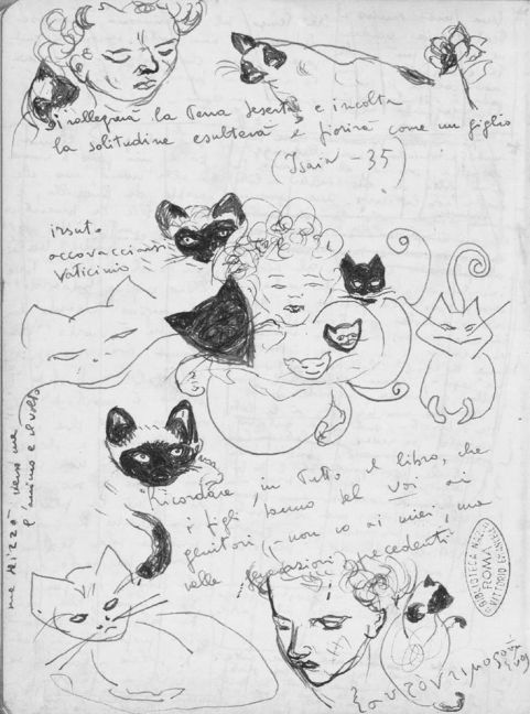 Canto por el Gato Alvaro - El amor tiene forma de gato