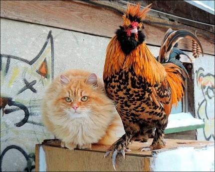 Gato y gallo (Alla Lebedeva)