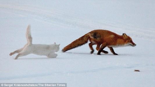 Syoma persigue a un zorro