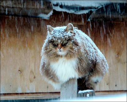 Un gato nevado de Alla Lebedeva