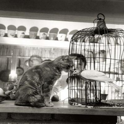 El niño, el gato y la paloma (1964)