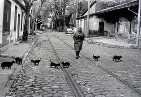 Los gatos de Bercy