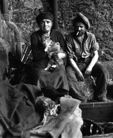 Los gatos de los sintecho (1950)