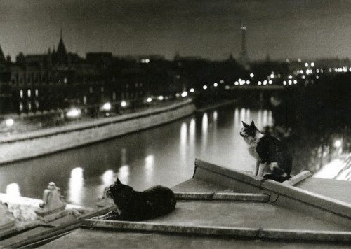 París, la noche, los gatos (1954)