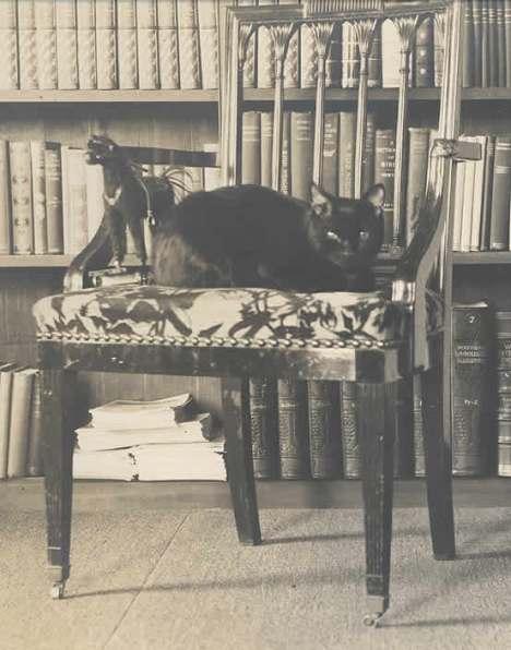 Bambino gato de Mark Twain
