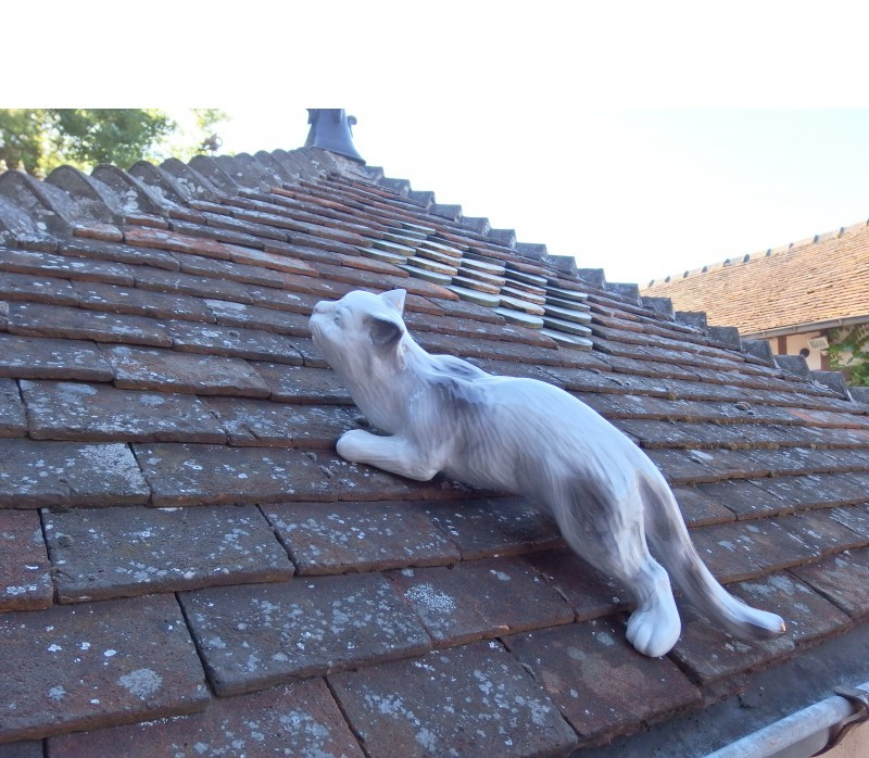 Resultado de imagen de gato sobre el tejado cazando
